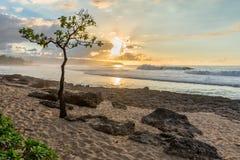 Árbol de paraguas en Rocky Point en la orilla del norte de Oahu, Hawaii en la puesta del sol foto de archivo