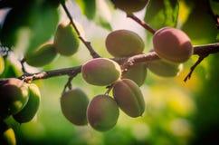 Árbol de peachs foto de archivo