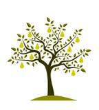Árbol de pera Fotos de archivo libres de regalías
