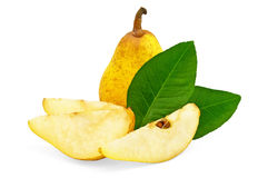 Árbol de pera amarillo con las hojas Fotografía de archivo