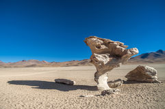 Árbol de piedra Fotografía de archivo libre de regalías