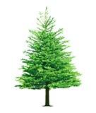 Árbol de pino foto de archivo