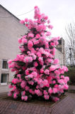 Árbol de pino adornado afuera Fotografía de archivo libre de regalías