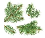 Árbol de pino aislado en blanco sin la sombra Foto de archivo libre de regalías
