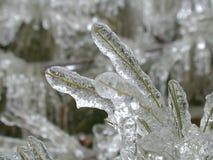 Árbol de pino congelado Imagen de archivo libre de regalías