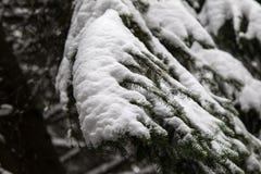 Árbol de pino congelado Fotografía de archivo