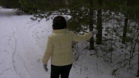 Árbol de pino conmovedor de la rama de la mujer mayor durante caminar en bosque conífero almacen de metraje de vídeo