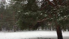 Árbol de pino contra la perspectiva del bosque conífero durante nevadas almacen de metraje de vídeo