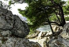 Árbol de pino croata con el mar adriático en el fondo - Brela, Makarska Riviera, Dalmacia, Croacia Imagenes de archivo