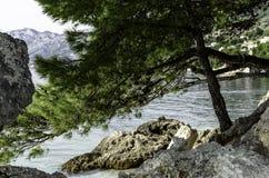 Árbol de pino croata con el mar adriático en el fondo - Brela, Makarska Riviera, Dalmacia, Croacia Foto de archivo libre de regalías