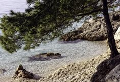 Árbol de pino croata con el mar adriático en el fondo - Brela, Makarska Riviera, Dalmacia, Croacia Imagen de archivo