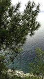 Árbol de pino croata con el mar adriático en el fondo - Brela, Makarska Riviera, Dalmacia, Croacia Imágenes de archivo libres de regalías