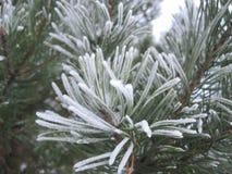 Árbol de pino cubierto con escarcha Imagen de archivo