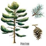 Árbol de pino de la acuarela Imágenes de archivo libres de regalías