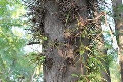 Árbol de pino en el bosque Imagen de archivo libre de regalías