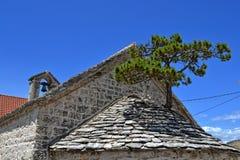 Árbol de pino en el tejado de la capilla Fotografía de archivo
