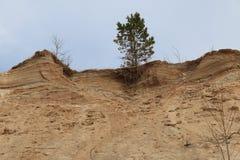 Árbol de pino en el top Fotos de archivo libres de regalías