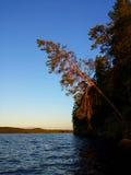 Árbol de pino en la luz de la puesta del sol Imagen de archivo libre de regalías