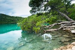 Árbol de pino en la orilla del agua Fotografía de archivo
