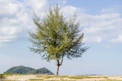 Árbol de pino en la playa con la isla del ratón en fondo Imagen de archivo