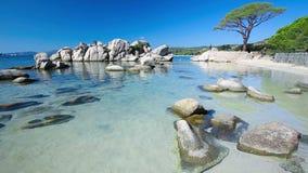 Árbol de pino en la playa de Palombaggia, Córcega, Francia, Europa metrajes