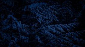 Árbol de pino en nevadas en la noche almacen de video