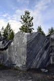 Árbol de pino encima del bloque de piedra de mármol Fotos de archivo