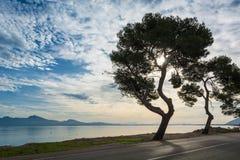 Árbol de pino hermoso en una orilla de la bahía contra el cielo azul Imágenes de archivo libres de regalías