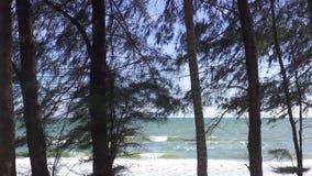 Árbol de pino inclinable del tiro en la playa y mar en tiempo de verano almacen de metraje de vídeo