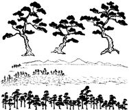 Árbol de pino japonés Fotos de archivo