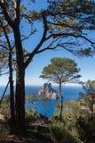 Árbol de pino de la puesta del sol del Es Vedra Ibiza imagen de archivo