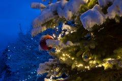Árbol de pino nevado con el ornamento rojo y la iluminación de la bola de cristal Imagenes de archivo