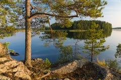 Árbol de pino por el lago Imagen de archivo libre de regalías