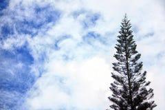 Árbol de pino que se coloca en el cielo Fotos de archivo