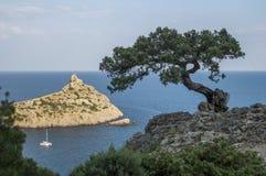 Árbol de pino sobre el mar Imagen de archivo libre de regalías