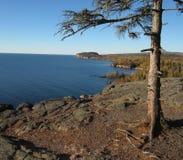 Árbol de pino solitario en el lago Superior Imagen de archivo libre de regalías