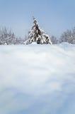 Árbol de pino solitario en un campo nevoso Opiniones de la postal Foto de archivo