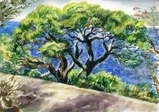 Árbol de pino viejo stock de ilustración