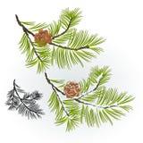 Árbol de pino y rama de los conos del pino otoñal y ejemplo nevoso del vector del fondo natural del invierno editable ilustración del vector