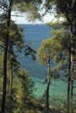 Árbol de pinos 2 Imagen de archivo libre de regalías
