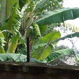 Árbol de plátano con un banch fotografía de archivo libre de regalías