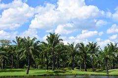 Árbol de Plam con el clound azul en el cielo Foto de archivo libre de regalías