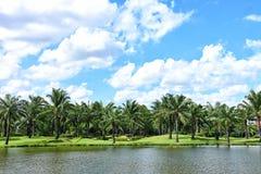 Árbol de Plam con el clound azul en el cielo Fotografía de archivo