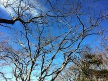 Árbol de ramificación Foto de archivo libre de regalías