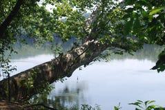 Árbol de reclinación en Potomac fotografía de archivo