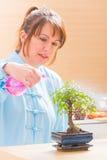 Árbol de riego de los bonsais de la mujer Imagen de archivo libre de regalías