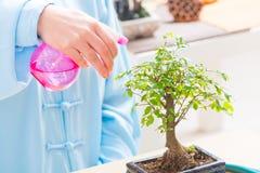 Árbol de riego de los bonsais de la mujer Foto de archivo libre de regalías