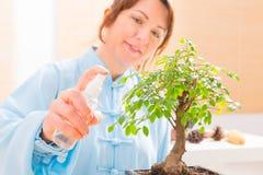 Árbol de riego de los bonsais de la mujer Fotografía de archivo