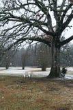 Árbol de roble en el invierno Fotos de archivo libres de regalías