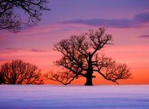 Árbol de roble en la puesta del sol imagen de archivo